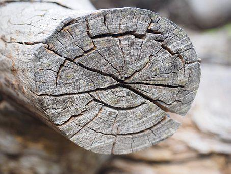 Wood, Grain, Branch, Structure