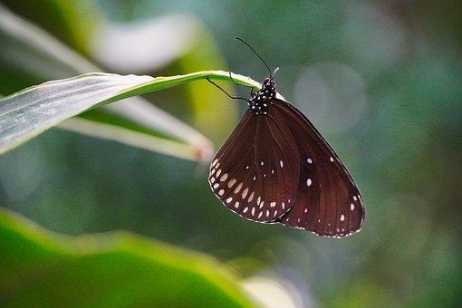 Butterfly, Beauty, Park, Nature, Landscape, Brown