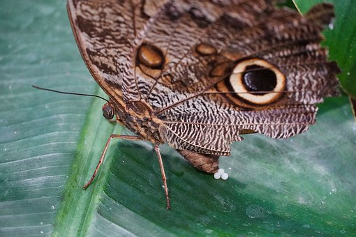 Butterfly, Insect, Close Up, Egg, Circular Pattern
