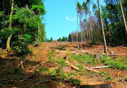 Teutoburg Forest, Logging, Spruce Die, Climate Change