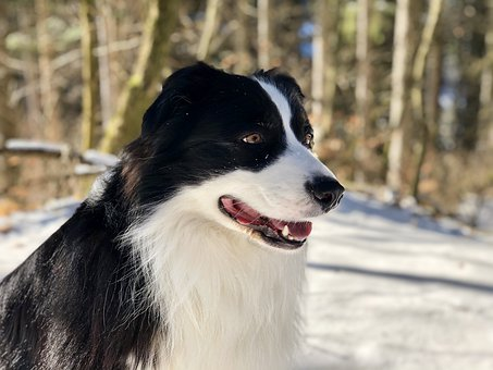 Dog, Forest, Pet, Animal, Animal Portrait, Dogs, Fur