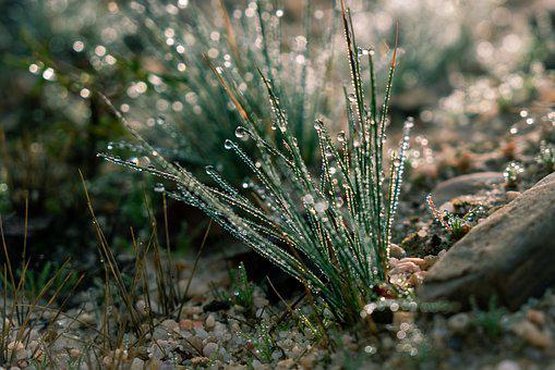 Rocio, Drops, Grass, Damp, Nature, Plant, Brightness