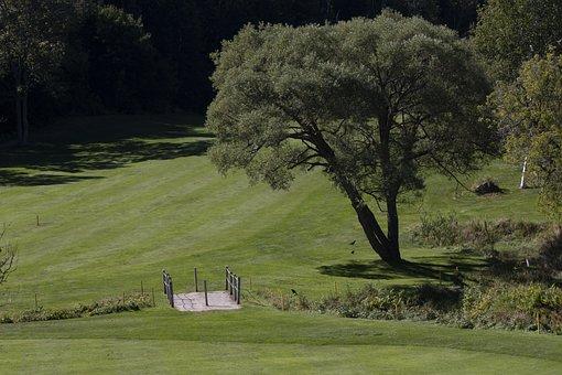 Tree, Grass, Golf Course, Landscape, Park, Environment