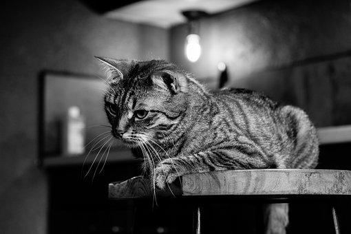 Cat, Home, Animal, Cute, Domestic, Feline, Portrait