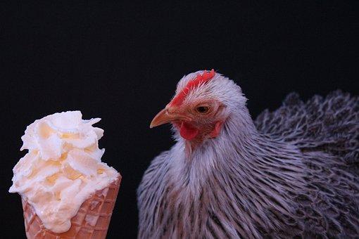 Ice, Cream, Summer, Ice Cream Sundae, Ice Cream