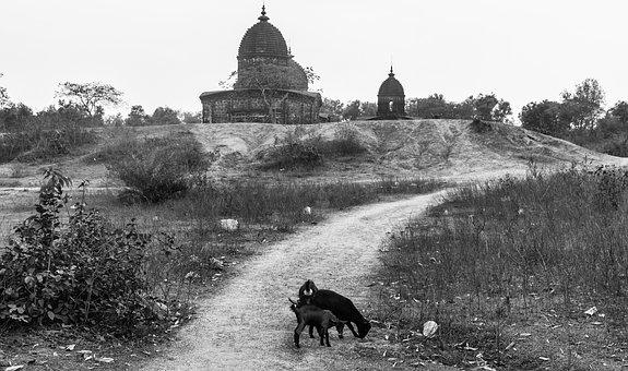 Landscape, Street, Black And White, Grayscale, Animals