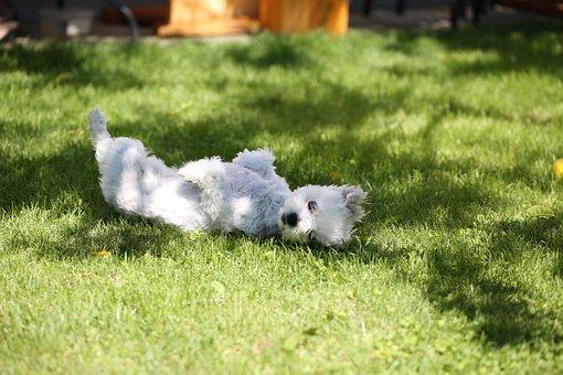 Dog, Grass, Meadow, Animal, Puppy, Pet, Garden, Green