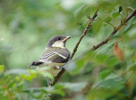 Bird, Nature, Cute, Wildlife, Garden, Spring, Grey
