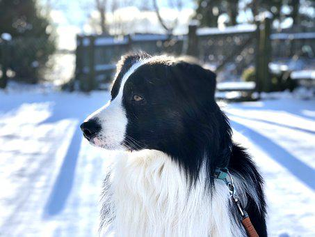 Dog, Forest, Animal, Pet, Nature, Winter, Snow