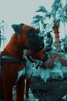 Dog, Boxer, Animal, Portrait, Cute, Purebred, Mammal