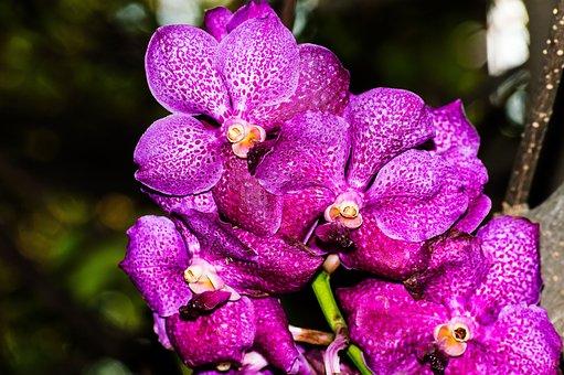 Beauty, Background, Yellow, Purple, Flora, Plant