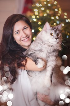 Cat, Silver, White, Portrait, Pussy, Animal