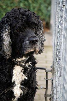 Dog, Cute, Puppy, Pet, Animal, Sad, Doggy, Looking
