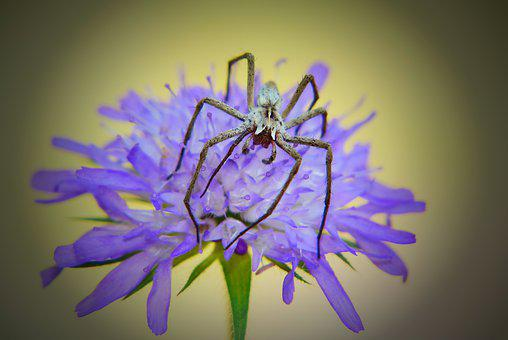 Darownik Wonderful, Female, Spider, Flower, Posts