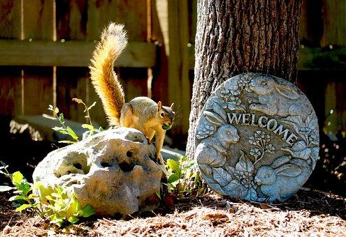 Squirrel, Acorn, Nut, Wild, Backyard, Welcome Sign
