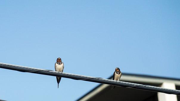 Birds, Swallow, Rest, Power Cord