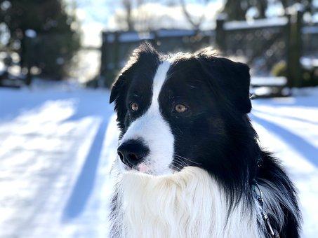 Fur, Dog, Winter, Pet, Animal Portrait, Snout, Dog Look
