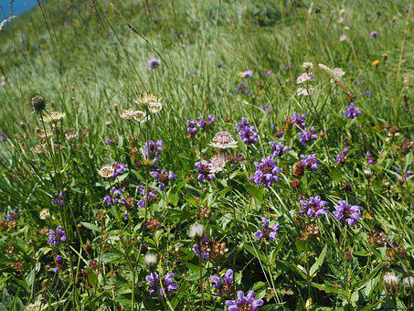 Alphabet, Alpine Meadow, Flower Meadow