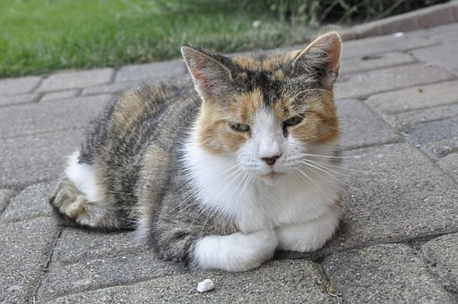 Katze, Animal Animals, Cat, Tired, Sweet, Cute, Sleep
