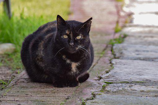 Cat, Stray, Animal, Black, Staring, Portrait, Homeless