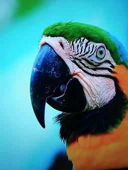 Last Year, Wild, Zoo Shot, Birds, Macaws, Beautiful