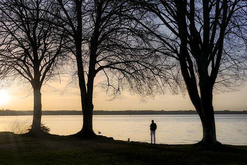 Man, Dog, Walk, Marvel, Outlook, Tree, Winter