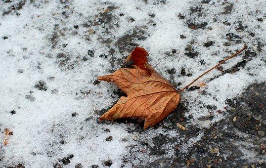 Leaf, Snow, Season, Cold, Frozen, Figure, Winter