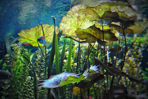 Underwater World, Diving, Fish, Nature, Marine Life