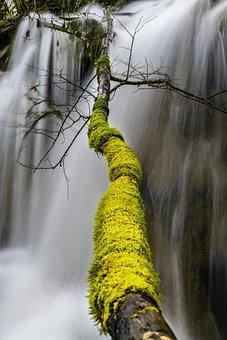Tree, Foam, Green, Winter, Color, Unusual, Cascade