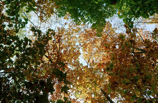 Trees, Forest, Foliage, Autumn, Colors, Leaves, Green