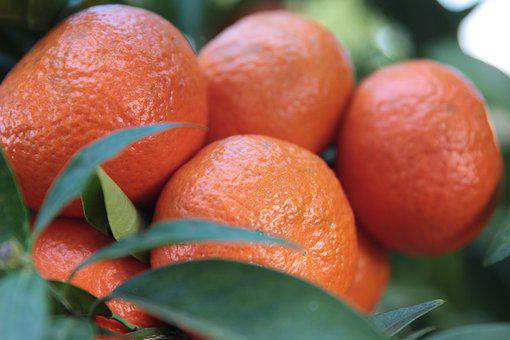 Tangerine, Citrus, Fruit, Food, Orange, Healthy, Fresh
