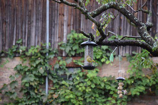 Greenfinch, Garden Bird, Birds