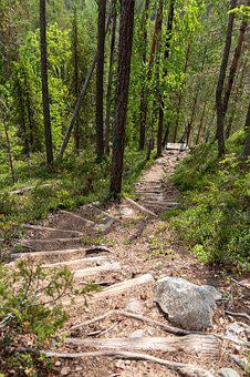 Path, Summer, Hiking, Forest, Nature, Walk, Hope