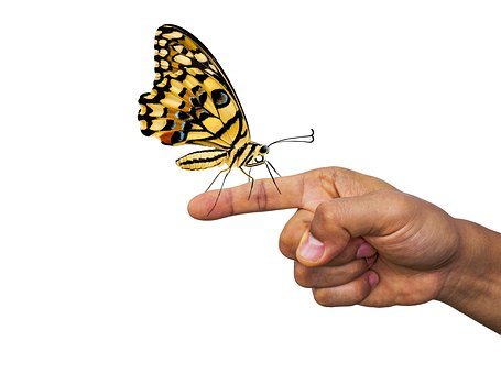 Butterfly, Finger, Insect, Nature, Hand, Serenity, Calm