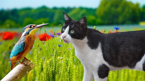 Curious, Cat, Bird, Watching, Danger, Pet, Cute, Kitten