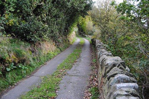 Lane, Wall, Tracks, Walls, Pathway, Road, Tree, Walk