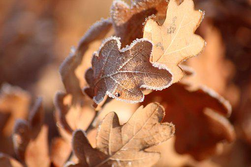 Leaf, Frost, Cold, Frozen, Figure
