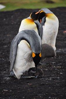 Port Stanley, Falkland Islands, Malvinien, Falkland