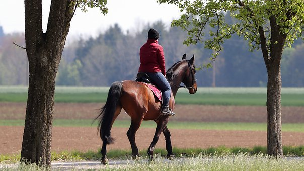 Horse, Ride, Mare, Rural, Nature, Horsewoman, Leisure