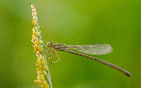 Dragonfly, Insect, Nature, Macro