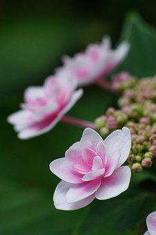 Flowers, Nature, Bloom, Garden, Pink, Plant