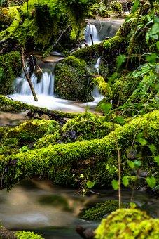 Nature, Incredible, Color, Colors, Green, Foam, Leaves