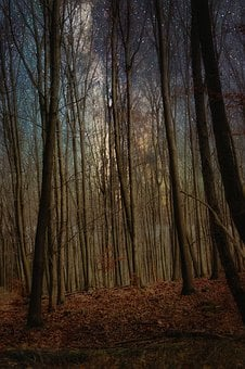 Forest, Trees, Leaves, Nature, Light, Autumn, Mystical