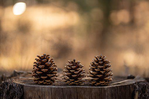 Pinecones, Pinecone, Forest, Fall, Brown, New Mexico