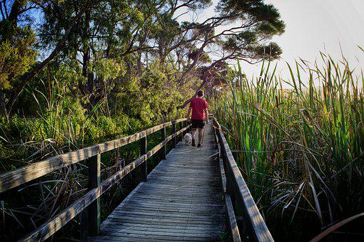 Walk, Nature, Boardwalk, Exercise, Path, Hiking