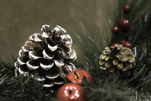 Winter, Still Life, Pinecone, Holiday, Nature