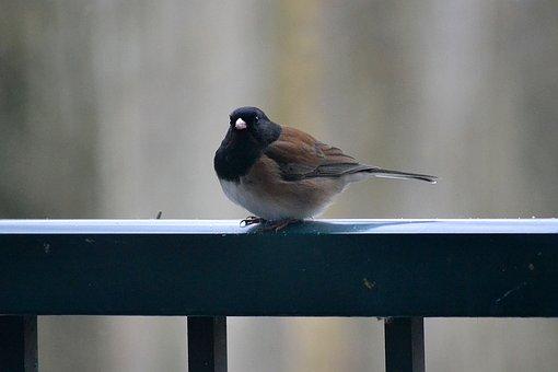 Bird, Feather, Rail, Animal, Plumage, Nature, Colorful