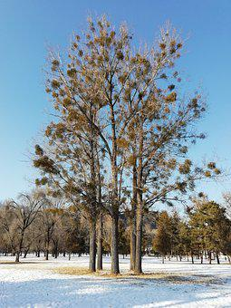 This Year, Chengde, Royal, Garden, Forest, Tree, Snow