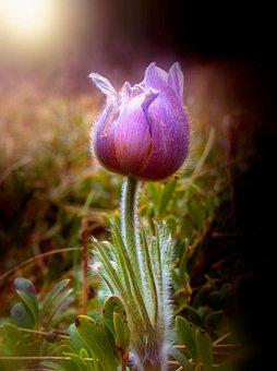 Flower, Light, Stem, Back, Light Macro