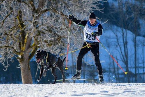 Dog Sled, Dog, Snow, Slide, Teamwork, Race, Competition